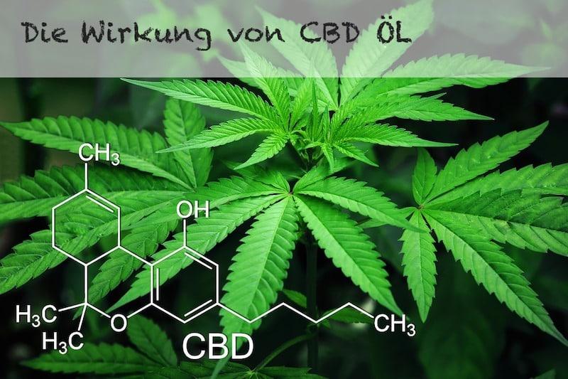 CBD Öl Wirkung im Test