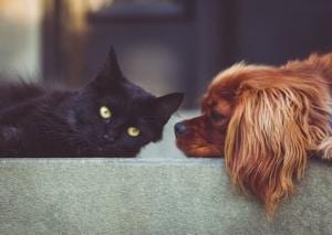 CBD bei Tieren sinnvoll?