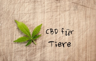 CBD für kranke Tiere