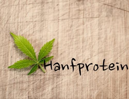 Hanfprotein: Nährwerte – Inhaltsstoffe und Vergleich zu Whey Protein