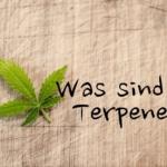 Was sind Terpene genau