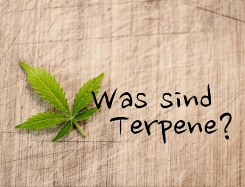 """Was sind Terpene? Alles zu den """"Lockstoffen"""" der Cannabispflanze"""