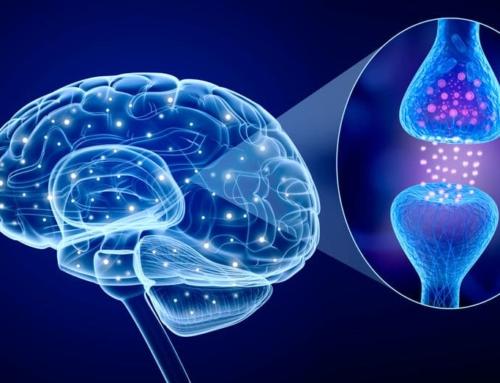 Cannabinoid Rezeptoren – Funktionsweise der CBD Rezeptoren im Körper