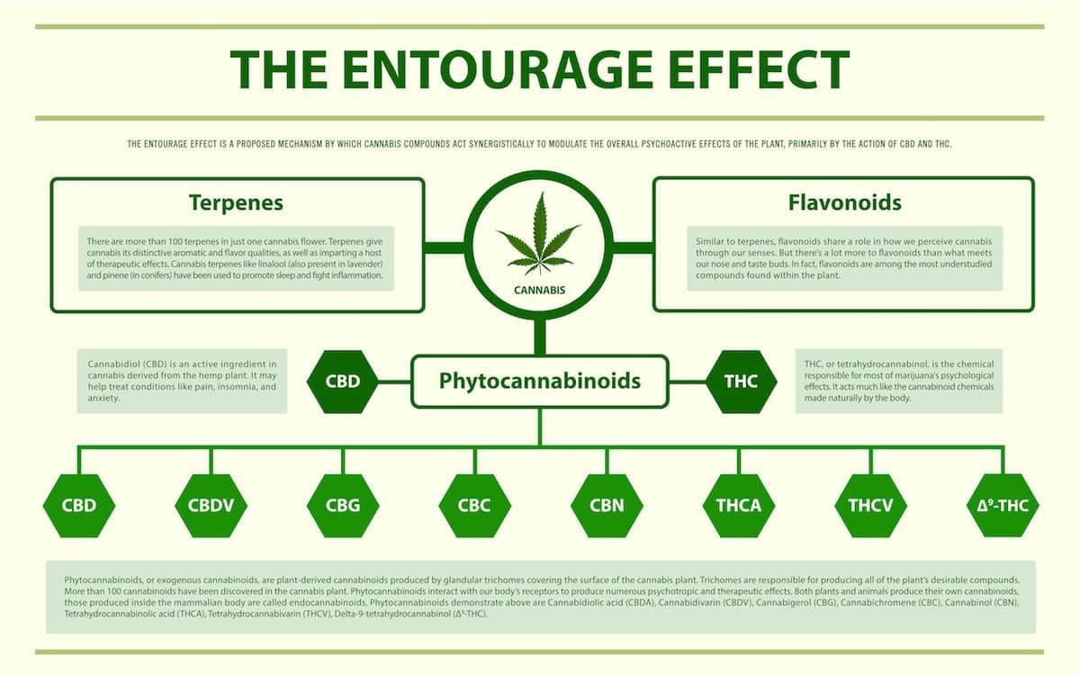 Was ist der Entourage Effect