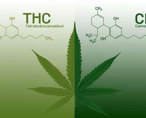 Unterschied THC CBD