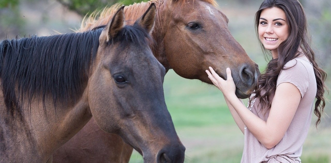 CBD für Pferd