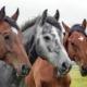 CBD für Pferde Erfahrungen