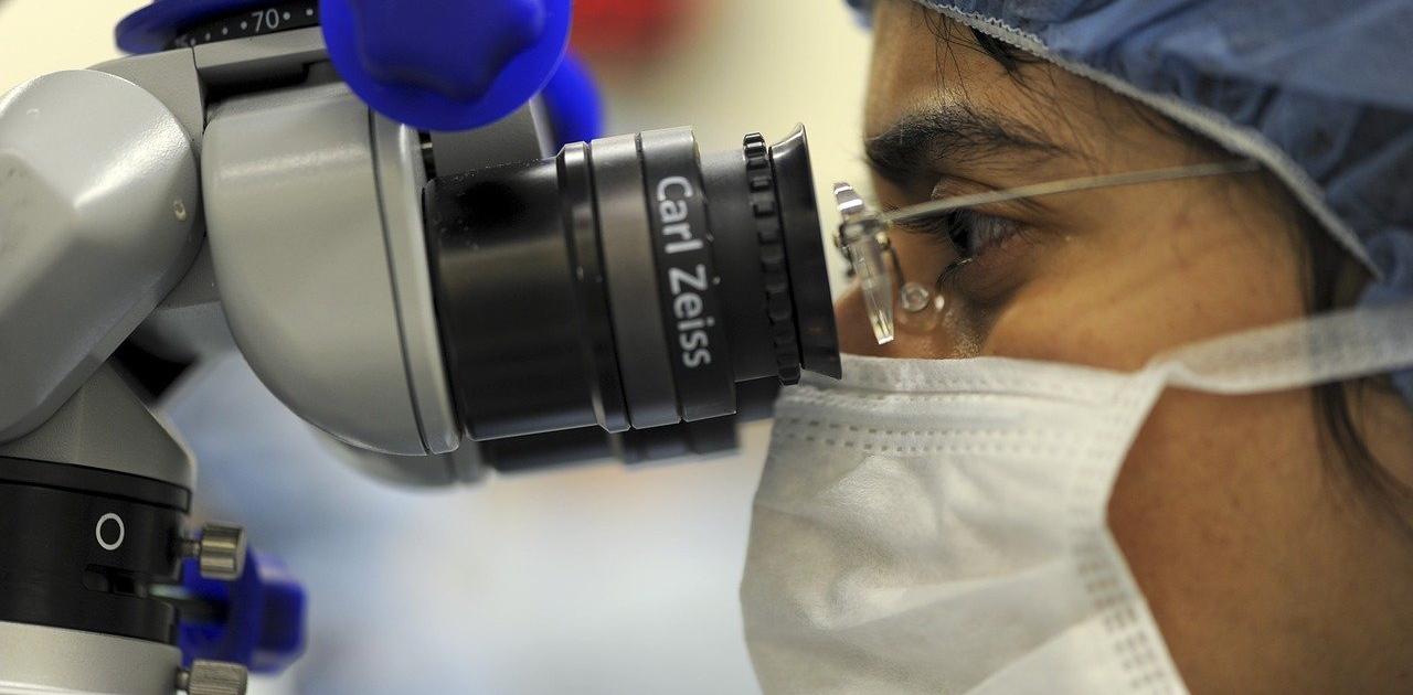 CBD Studien bei Transplantationen