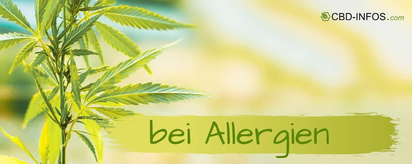 CBD Öl Erfahrungen bei Allergie
