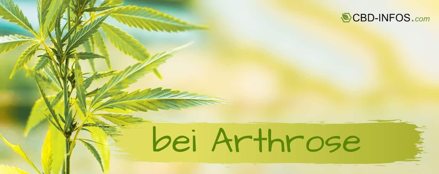 CBD Öl Erfahrungen bei Arthrose