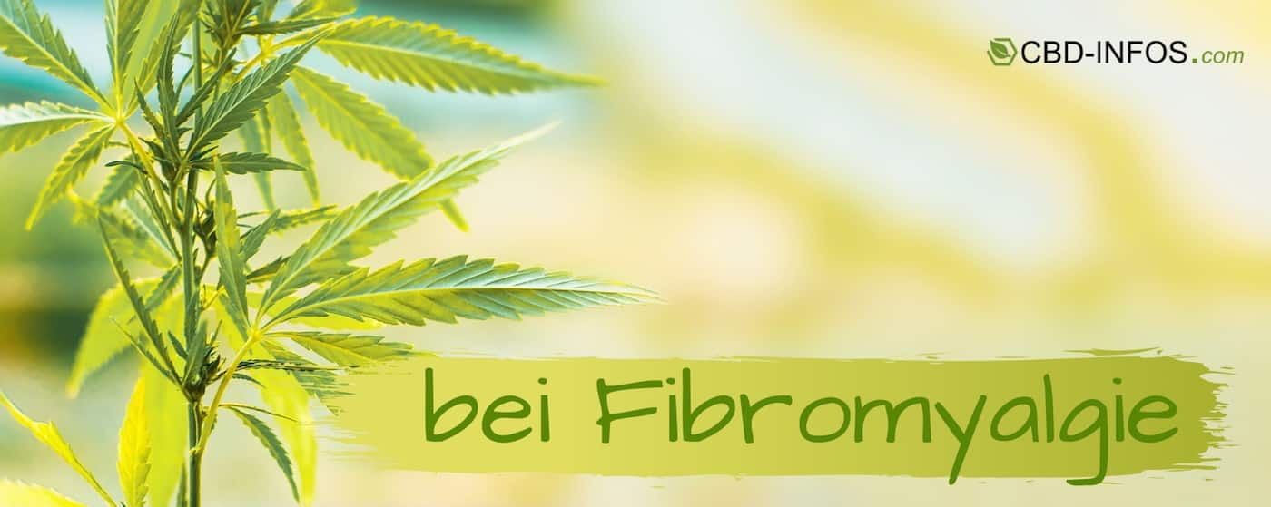 CBD Öl Erfahrungen bei Fibromyalgie