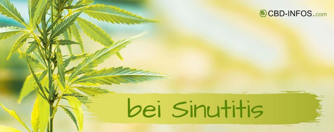 CBD Öl Erfahrungen bei Sinusitis