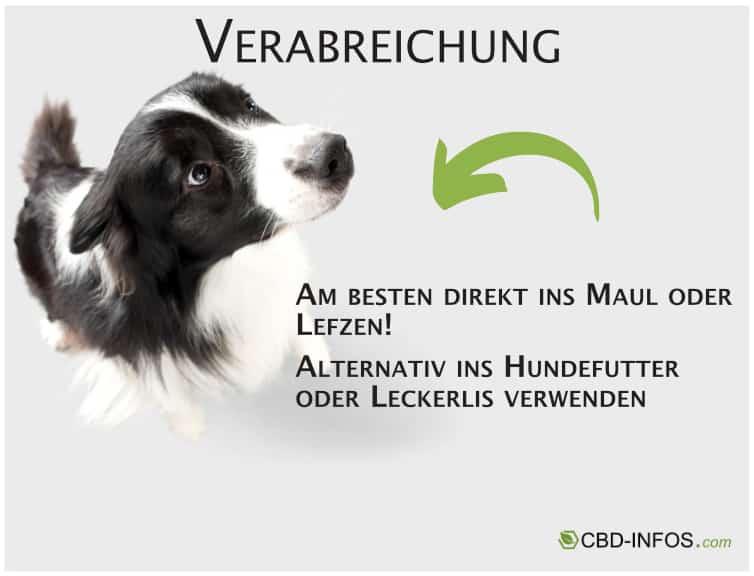 Wie verabreicht ich dem Hund CBD?