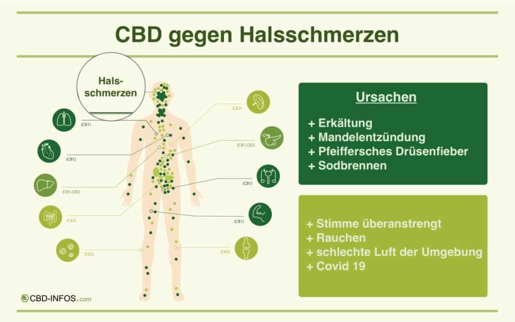 CBD gegen Halsschmerzen Infografik