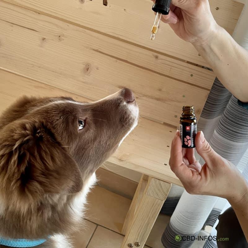 CBD Öl für Hunde von SwissFX